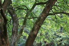 Zielony las Zdjęcia Royalty Free