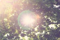 Zielony las (Filtrujący wizerunek przetwarzający rocznik e Zdjęcie Royalty Free