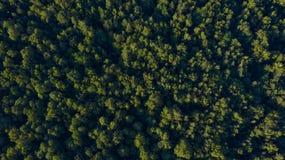Zielony las na zmierzchu, zasięrzutny widok zdjęcia stock