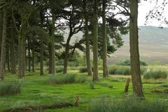 Zielony las w górach obrazy stock