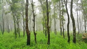 Zielony las w mglistym ranku przy Pa Hin Ngam parkiem narodowym Zdjęcia Stock