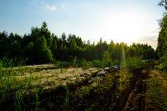 Zielony las w wieczór Zdjęcia Royalty Free