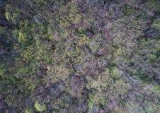 Zielony las w wiośnie, antena strzał Obraz Royalty Free
