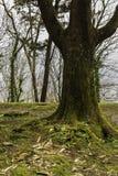 Zielony las w zimie Obraz Stock