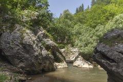 Zielony las wokoło Erma rzeki wąwozu Fotografia Royalty Free
