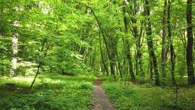Zielony las z ścieżką, drzewami i słońca światłem iść przez liści, zdjęcie wideo