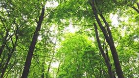 Zielony las z drzewami i słońca światłem iść przez liści zdjęcie wideo