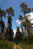 Zielony las z niebieskim niebem i chmurami. Zdjęcie Stock