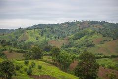 Zielony las, zielona góra w Phetchabun prowinci, Tajlandia Zdjęcie Stock