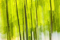 Zielony lasowy abstrakcjonistyczny tło Zdjęcie Royalty Free