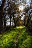 Zielony lasowy ślad Fotografia Stock