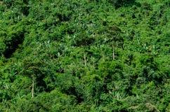 Zielony lasowy tło Zdjęcia Royalty Free