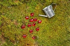 Zielony lasowy valentines tło Fotografia Royalty Free