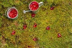Zielony lasowy valentines tło Zdjęcie Stock
