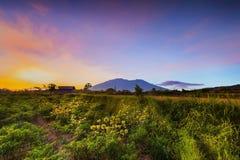 Zielony lasu Daylight-4 Zachodni sumatera obraz royalty free