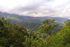 Zielony lasu Daylight-2 Zachodni sumatera zdjęcie royalty free