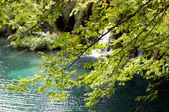 zielony lato Zdjęcie Stock