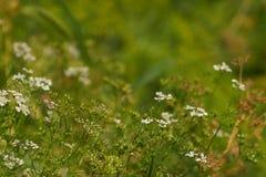 zielony lato Zdjęcia Royalty Free