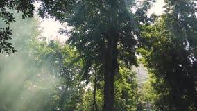 Zielony lato park w mgle w dymu zbiory wideo