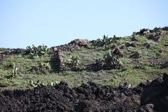 Zielony lawa krajobraz Zdjęcie Stock