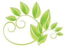 zielony leafs wektora Zdjęcie Stock