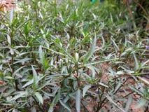 Zielony leefy rośliny zbliżenie obraz stock