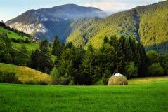 Zielony lej Zdjęcie Royalty Free