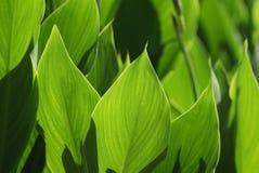 zielony liść światła cień fotografia stock