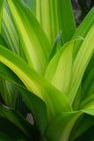 zielony liść Zdjęcia Stock