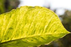 zielony liść Obraz Stock