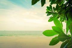 Zielony liść (Filtrujący wizerunek przetwarzający rocznik) Fotografia Stock
