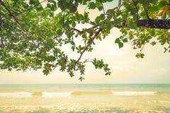 Zielony liść (Filtrujący wizerunek przetwarzający rocznik Zdjęcia Royalty Free