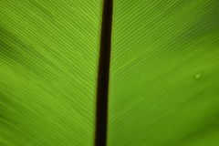 Zielony liść i cienia światło Zdjęcia Stock
