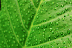 Zielony liść i las Obrazy Royalty Free