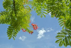 Zielony liść i mały kwiat Fotografia Stock