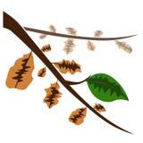 Zielony liść i suszy liście wektorowych royalty ilustracja