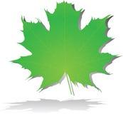 Zielony liść klonowy Zdjęcia Royalty Free