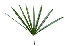 Zielony liść kształtować ostre Dekoracyjne rzeczy wewnątrz stwarzają ognisko domowe i festiwale odizolowywający zdjęcia stock