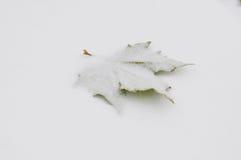 Zielony liść na białym śniegu Zdjęcia Royalty Free