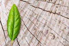 Zielony liść na drewnie Zdjęcie Royalty Free
