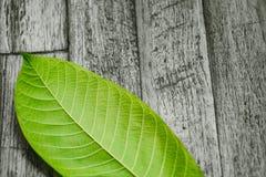 Zielony liść na drewno stołu natury tle Zdjęcia Royalty Free