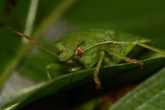 Zielony liść na liściu zdjęcie royalty free