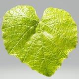 Zielony liść na przejrzystym tle zdjęcia stock
