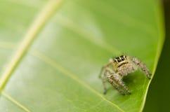 zielony liść natury pająk Zdjęcia Royalty Free