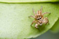 zielony liść natury pająk Obraz Stock