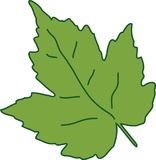 Zielony liść, natury tworzenie Obrazy Royalty Free