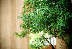 Zielony liść obok fortecznego ściennego wejścia obrazy royalty free