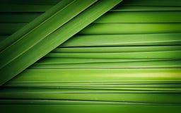 Zielony liść Papirusowy abstrakt zdjęcie stock