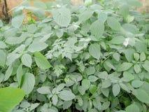 Zielony liść patrzeje należnie zdjęcie stock