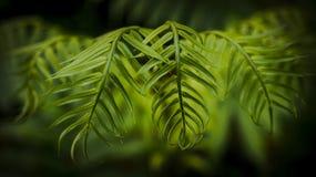 Zielony liść - piękno natura Obrazy Royalty Free